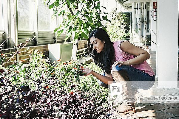 schöne Agraringenieurin  die die Pflanzen im Gewächshaus beobachtet