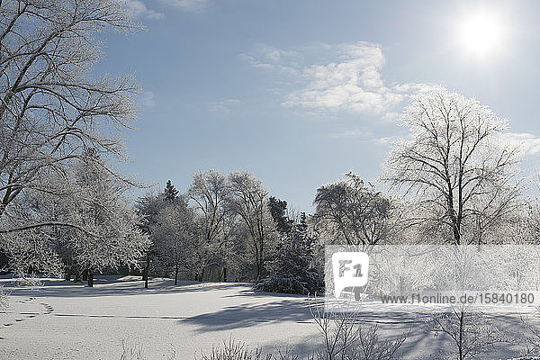Beautiful Frost Covered Trees on Winter Morning