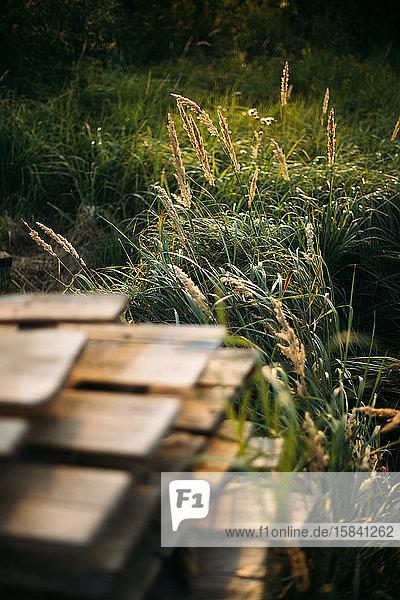 Büsche und Bretter auf grüner Graszusammensetzung