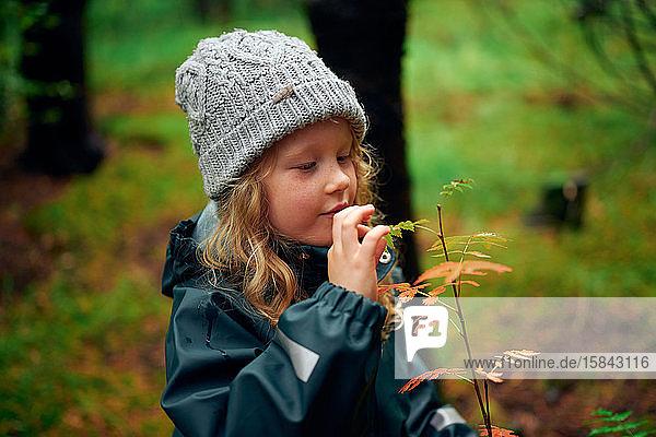 Aktives Kind berührt Blätter am Ast im Wald