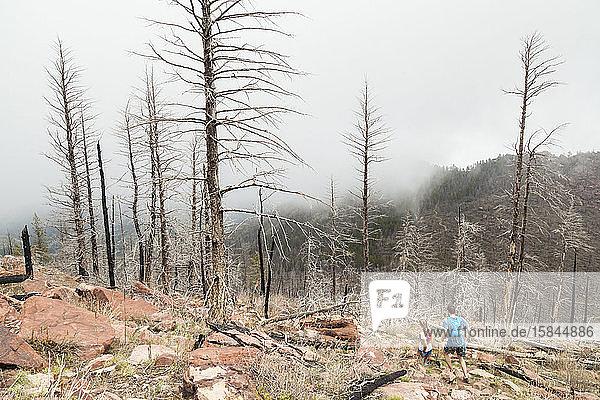 Menschen rennen an verbrannten Bäumen auf South Boulder Peak  Colorado  vorbei