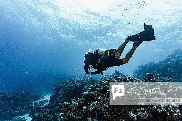 Taucher bei der Erforschung des Grossen Barriereriffs in Australien