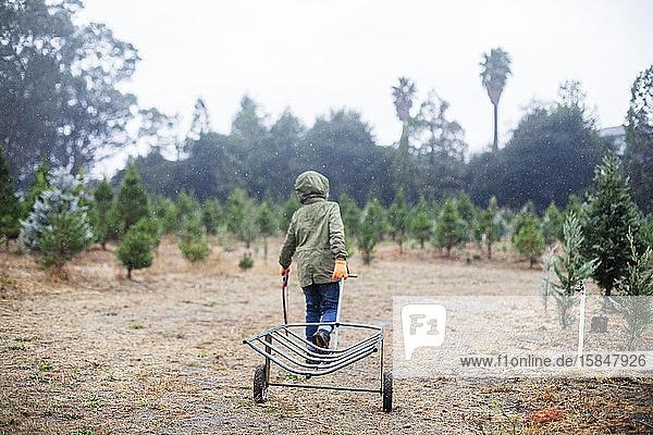 Rücken eines Kindes mit einem Sägeschubwagen auf einer Weihnachtsbaumfarm