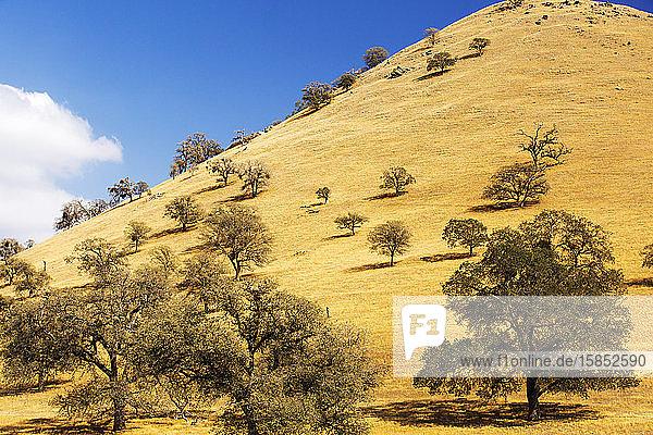 Drought killed trees near Tehachapi Pass  in California's four year long drought  USA.