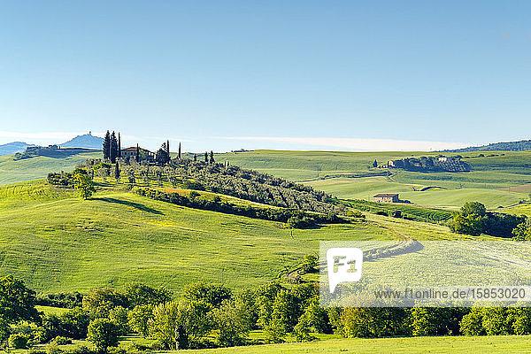 Toskanische Landschaft bei Castiglione d'Orcia  Val d'Orcia  Toskana  Italien