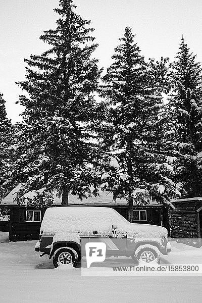 Old SUV in front of snow covered pine trees