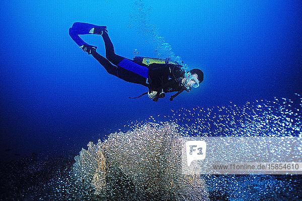 Taucher beobachten einen Schwarm Glasfische um eine Fächerkoralle in Madagaskar.