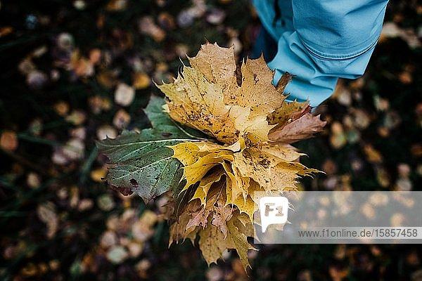 Kind hält einen Strauss bunter Herbstblätter in einem Wald