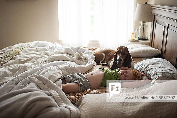 Kleinkind Junge schläft zu Hause im Bett mit einem Dachshund neben sich