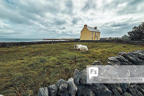 Panoramablick auf ein auf dem Gras liegendes weißes Pferd