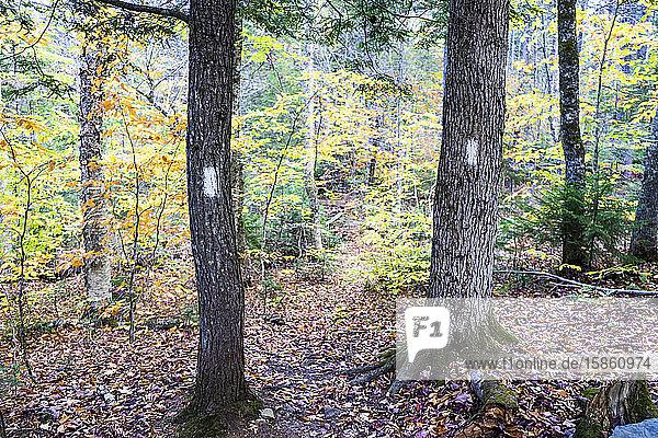 Trailblazes on trees showing the path ahead