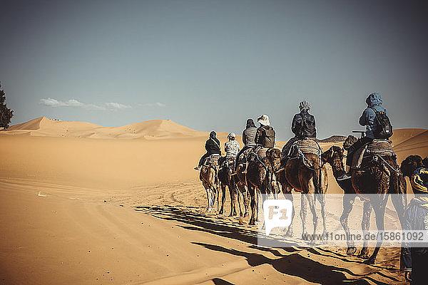 Menschen zu Dromedaren durch die Wüste