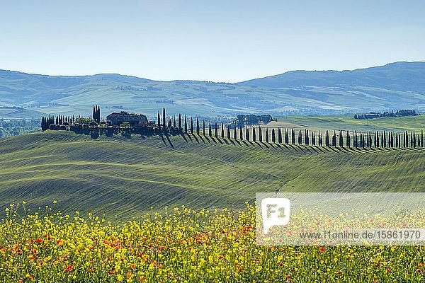 Agritourismo di Poggio Covili  Castiglione d'Orcia  Val d'Orcia  Toskana  Italien