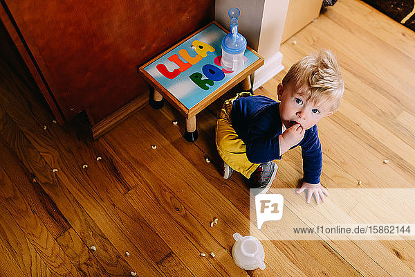 A toddler boy eats cereal off the floor.
