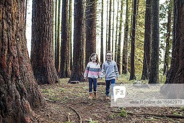 Jungen und Mädchen,  die durch den Wald im Park spazieren.