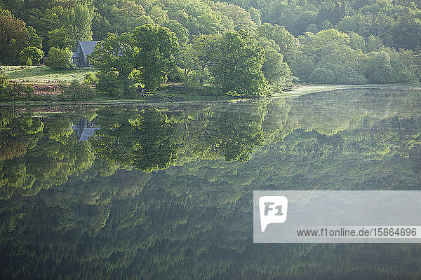 Reflection of trees in a loch  Scotland  United Kingdom  Europe