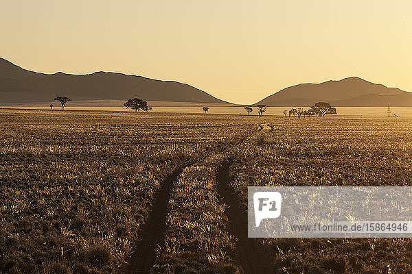 Track at sunset in the Namib Desert  Namibia  Africa