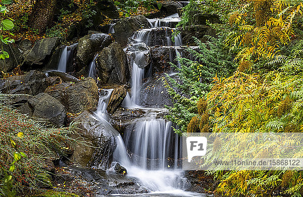 Water cascades over rocks and the foliage on trees in autumn colours  VanDusen Gardens; Vancouver  British Columbia  Canada