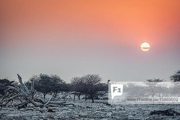 Sun setting at Etosha National Park; Namibia