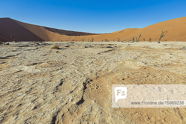 Deadvlei  a white clay pan surrounded by the highest sand dunes in the world  Namib Desert; Namibia