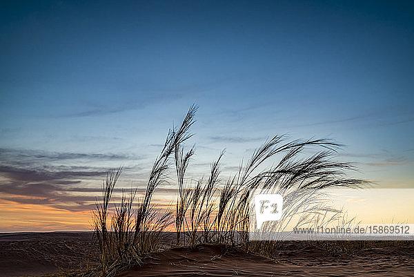 Elim dune  Sesriem  Namib Desert  Namib-Naukluft National Park; Namibia