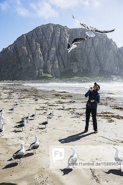 Western Gulls (Larus occidentalis) hover over and surround woman standing on the beach with Morro Rock in the background; Morro Bay  California  United States of America