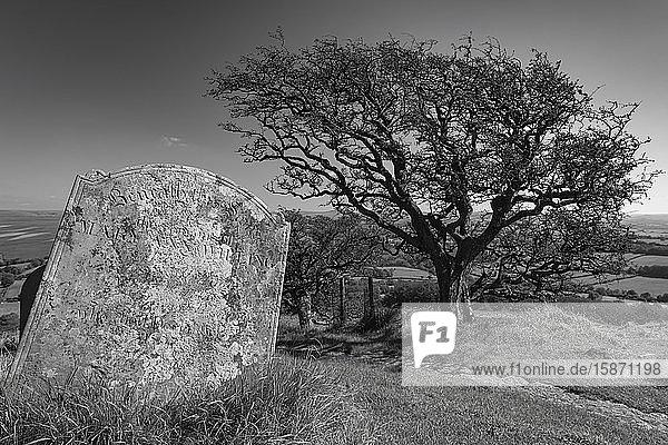 Tombstone and Hawthorn Tree in Brentor churchyard  Brentor  Dartmoor  Devon  England  United Kingdom  Europe