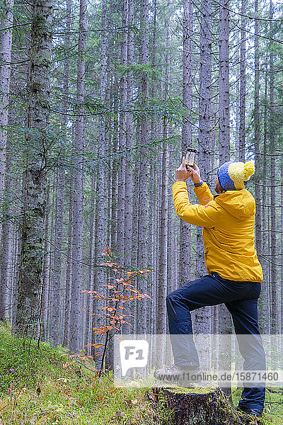 Man photographing trees with mobile phone  Somadida Reserve  Dolomites  Auronzo di Cadore  Veneto  Italy  Europe