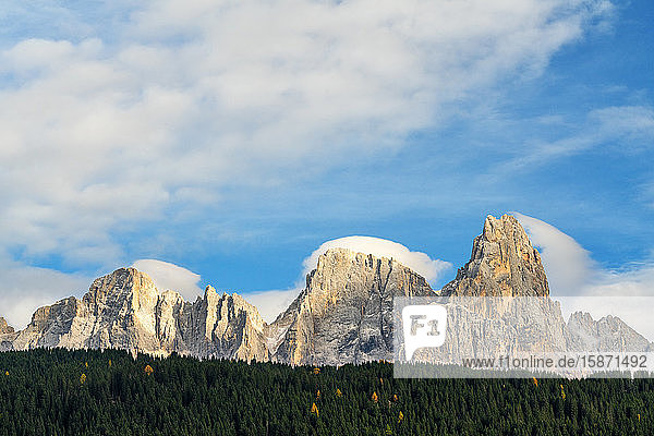 Majestic Pale di San Martino (Pala group) surrounded by woods in autumn  Rolle Pass  Dolomites  Trentino  Trento  Italy  Europe