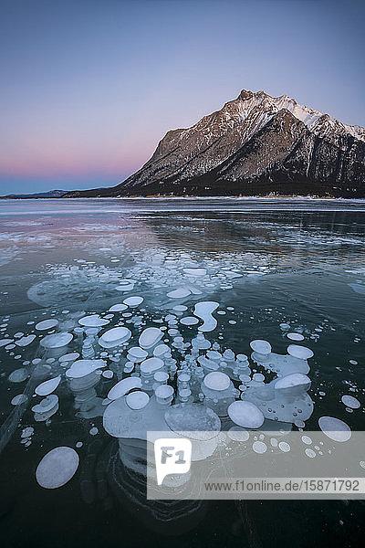 Trapped Methane gas bubbles at Lake Abraham  Kootenay Plains  Alberta  Canadian Rockies  Canada  North America