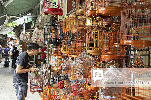 Bird Market  Mong Kok  Kowloon  Hong Kong  China  Asia
