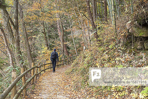 Man hiking forest on Nakasendo Way  Tsumago  Gifu Prefecture  Honshu  Japan  Asia