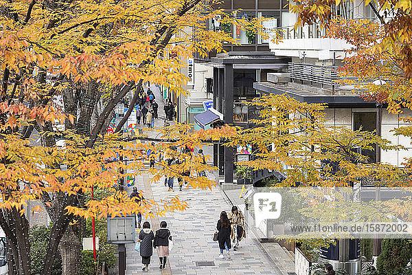 People walking along Omotesando Street  Harajuku  Tokyo  Honshu  Japan  Asia