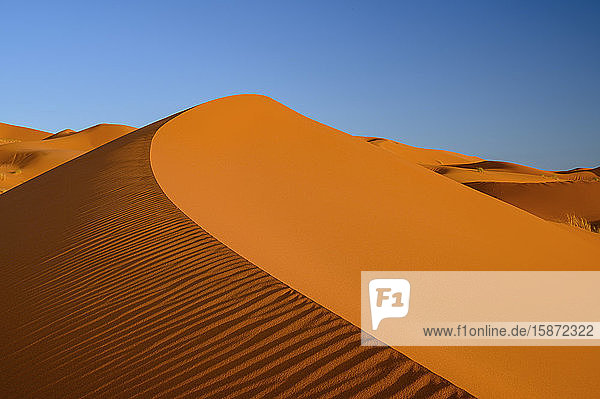 Sand dunes with blue sky  Sahara Desert  Morocco  North Africa  Africa