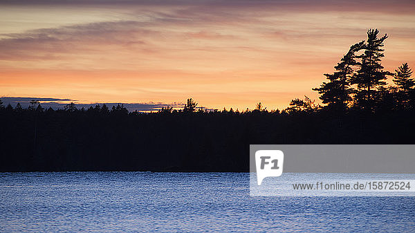 Silhouette of trees and lake at sunset