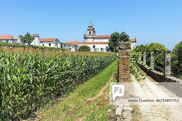 St. Martin of Tibaes Monastery  Corn field  Braga  Minho  Portugal.