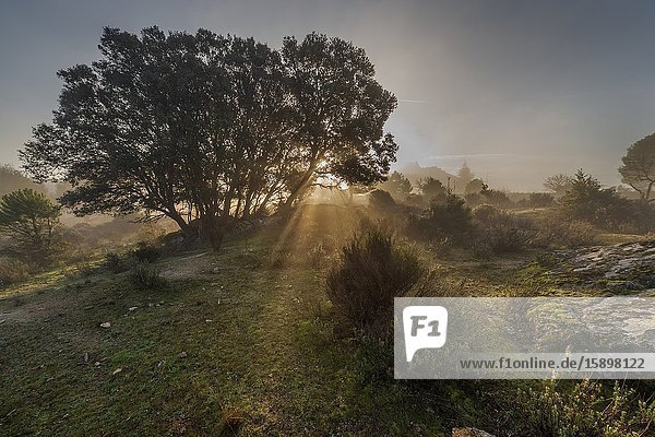 Sun rays over Muniana Cliff at Piquillo pinewood on a foggy day. Cadalso de los Vidrios. Madrid. Spain. Europe.