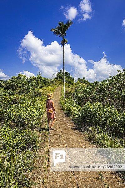 Woman on the Campuhan Ridge Walk  Ubud  Bali  Indonesia.