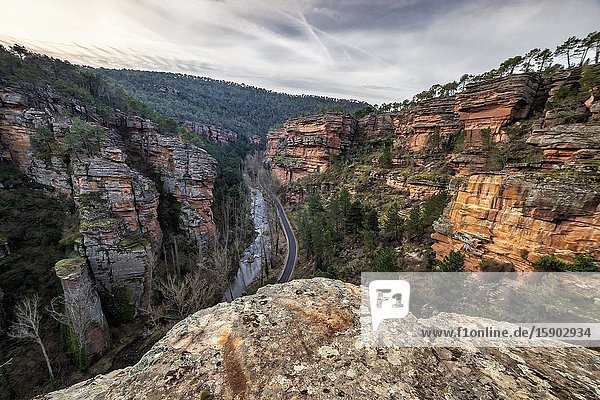 Road  conifers and river and Gallo gorge on a winter morning. Guadalajara. Spain. Europe.