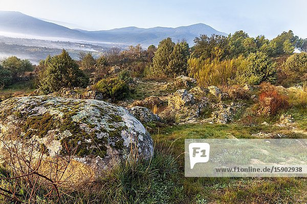 Roacks with moss  grass  conifers and fog at Alberche Valley and Sierra de Gredos on the background. Avila. Spain. Europe.