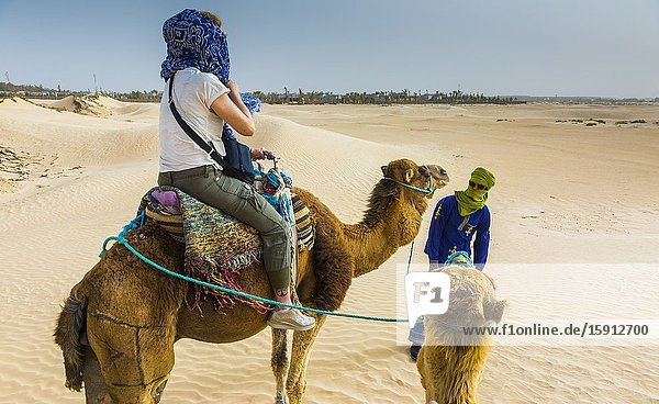 Woman and guide in a dromedary ride. Douz  Tunisia  Africa.