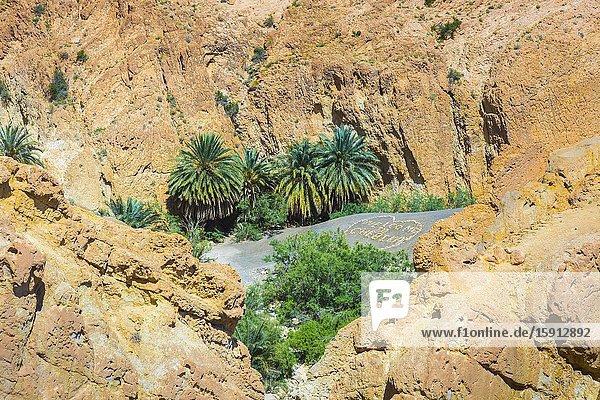 Mountain oasis. Chebika. Tunisia  Africa.