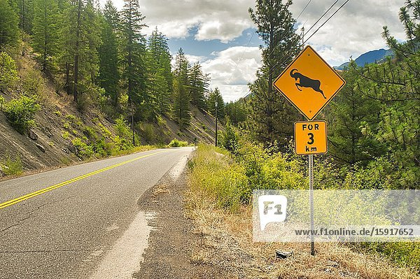 Big horn sheep on road warning  Highway 12 south of Lillooet  British Columbia  Canada.
