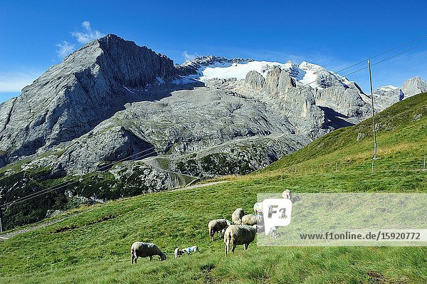 The Marmolada (3 342m) is the highest mountain of the Dolomites. They are a mountain range declared a UNESCO World Heritage Site. Belluno province  Italy