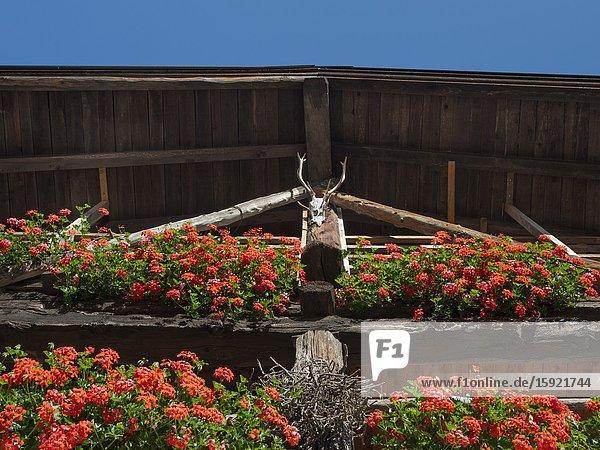 Medieval village Iron in the Dolomiti di Brenta  part of UNESCO world heritage Dolomites. Europe  Italy  Trentino