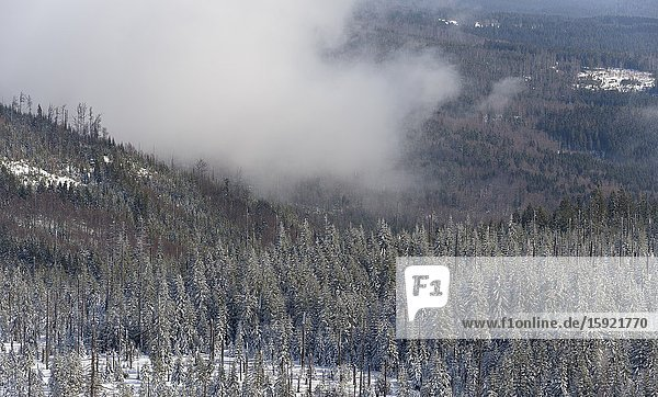 View from peak of Mount Lusen. Winter at Mount Lusen in National Park Bavarian Forest (Bayerischer Wald)  Europe  Central Europe  Germany  Bavaria.
