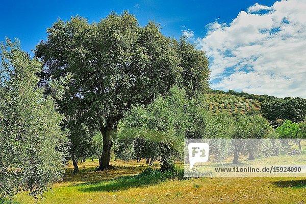 The Villuercas-Ibores-Jara Geopark. Cáceres province  Spain