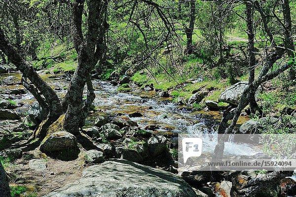 The valley of Lozoya in the Sierra de Guadarrama National Park. Rascafria town  Madrid province  Spain