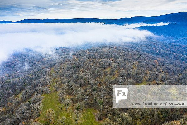 Deciduous forest and fog. Aerial view. Aranarache area. Navarre  Spain  Europe.
