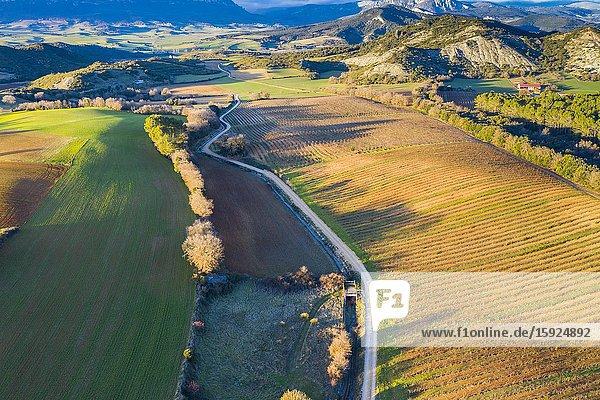 Vineyard. Aerial view. Ayegui. Navarre  Spain  Europe.
